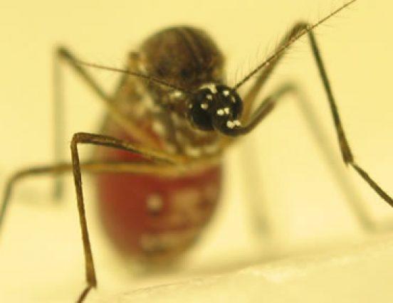 FAPEMA apoia estágio internacional em sequenciamento genético pra controle da malária