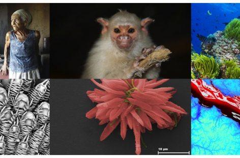 Pesquisadores podem concorrer a prêmio de fotografia do CNPq