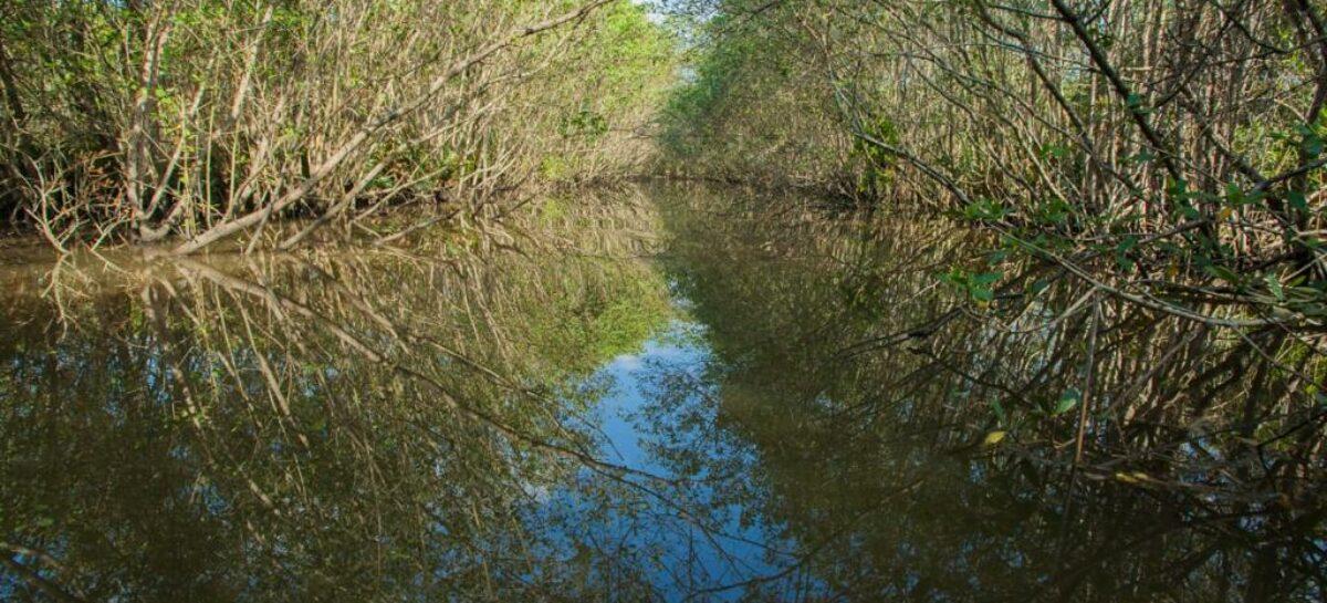 Pesquisadores apresentam impactos que afetam biodiversidade dos manguezais brasileiros